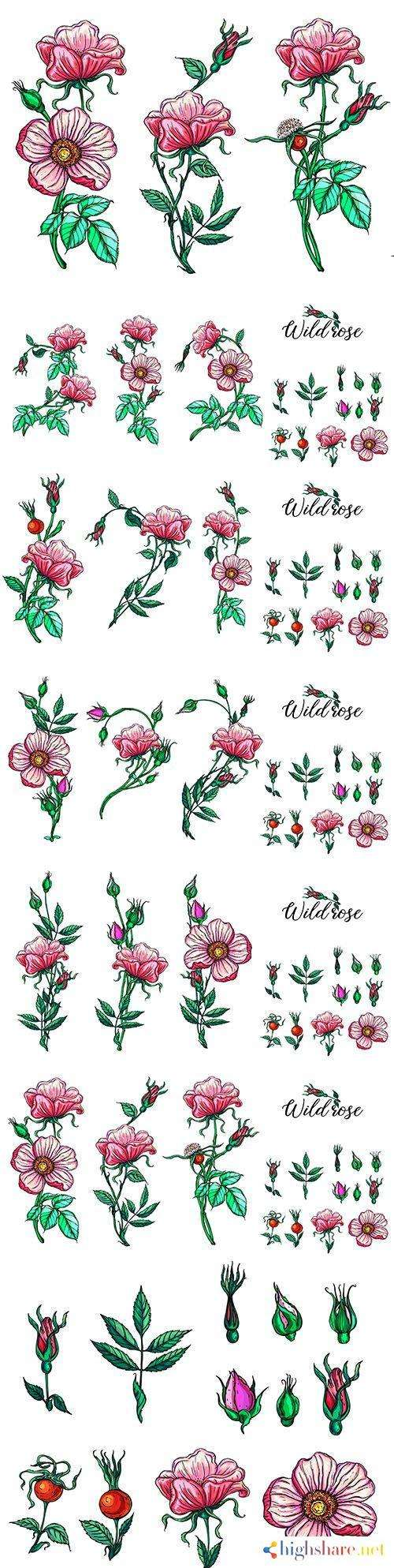 pink roses and buds set floral compositions design 5f41e6e2ca63f - Pink roses and buds set floral compositions design