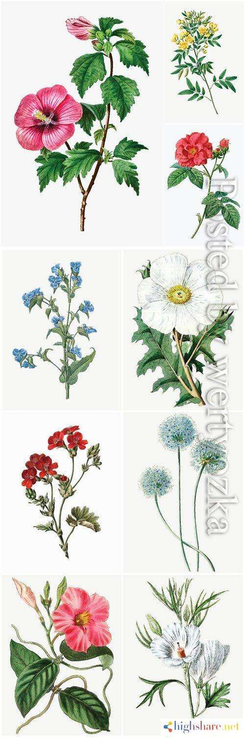 set of beautiful blooming vector flowers 2 5f41e60aaea01 - Set of beautiful blooming vector flowers # 2