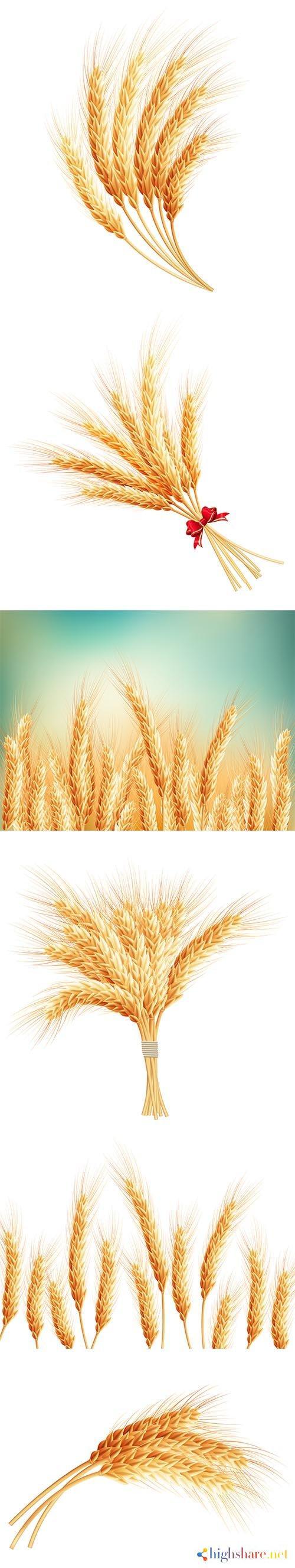 wheat ears isolated 5f409d943befe - Wheat Ears Isolated